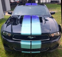 Mustang with multi-color stripes